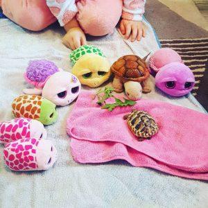 turtle obession